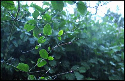 en regen
