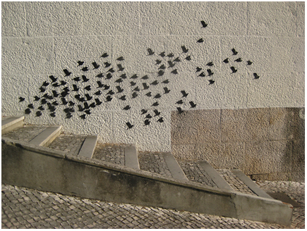Vogels in Coimbra