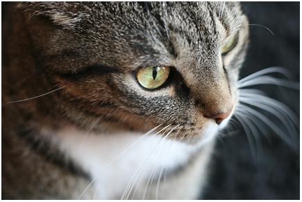 miauw miauw miauw